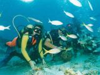 Torrevieja diving club - Scuba Tribe
